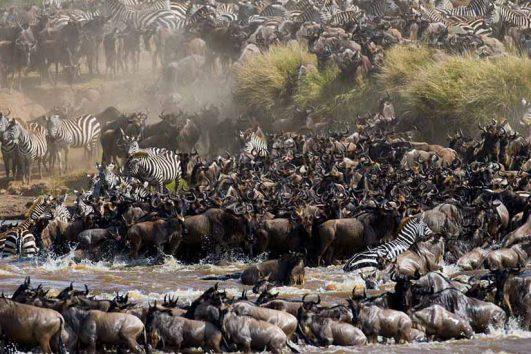 Serengeti Packages